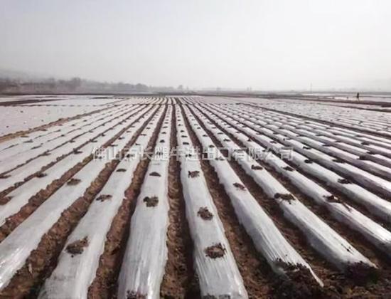 农用pe薄膜