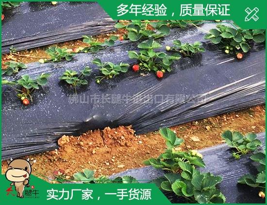 中山疏菜膜